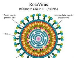 rotavirüs